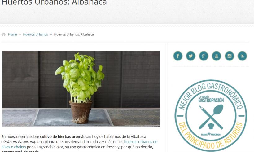 El cultivo de la albahaca en los huertos urbanos