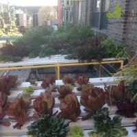 Hidropónicos, Huertos Urbanos de Nueva York por EcoAsturias (VI)