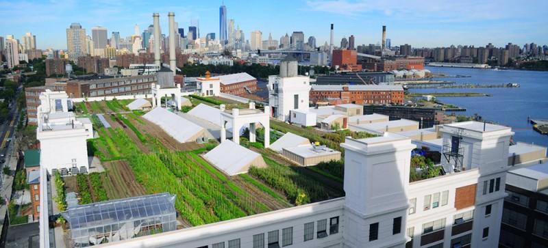 Brooklyn Grange, Huertos Urbanos de Nueva York por EcoAsturias (II)