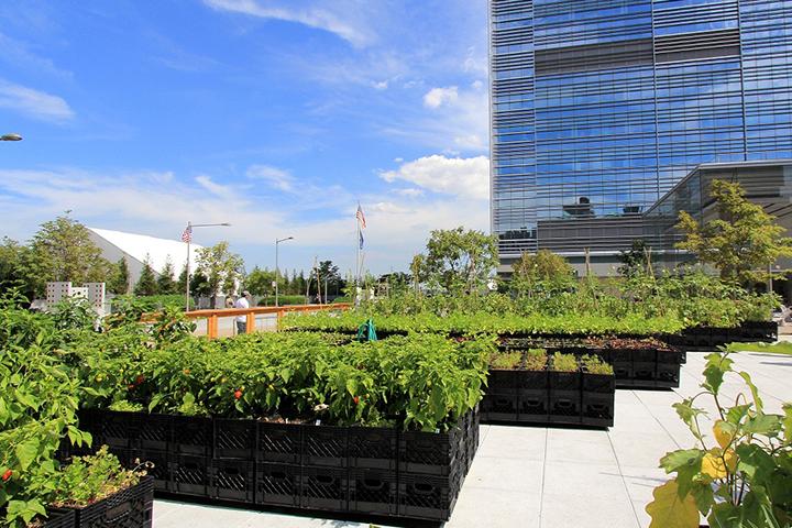 Huertos Urbanos Nueva York por EcoAsturias (VII)