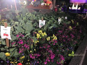 Cultivos en el huerto urbano de Disneyworld
