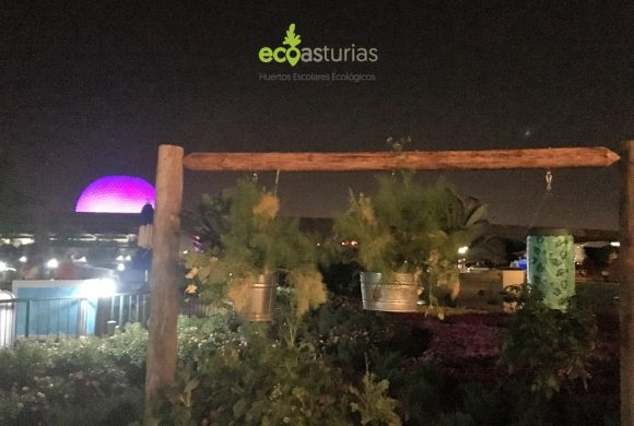 Huertos urbanos de Disneyworld Orlando II